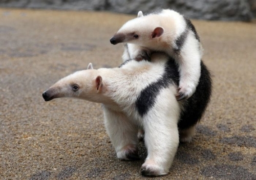 عکس های زیبا از حیوانات و بچه حیوانات