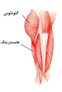 ورزش هاي عضلات باسن و ران (تصویری)