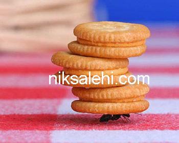 عکس از قویترین مورچه ی دنیا