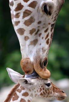 عکس: یک بوس کوچولو!