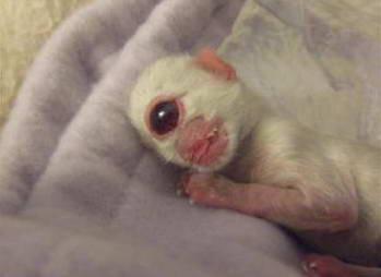 عکس عجیب: بچه گربه یک چشم!