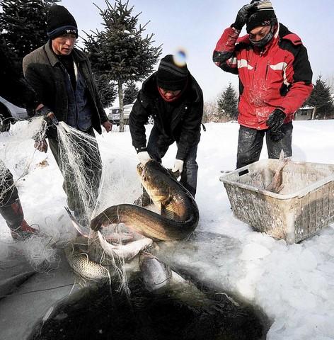 صید ماهی از دریاچه ای یخ زده در هاربین چین